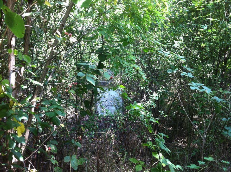 Das Grab meiner Großeltern am 27.08.2016