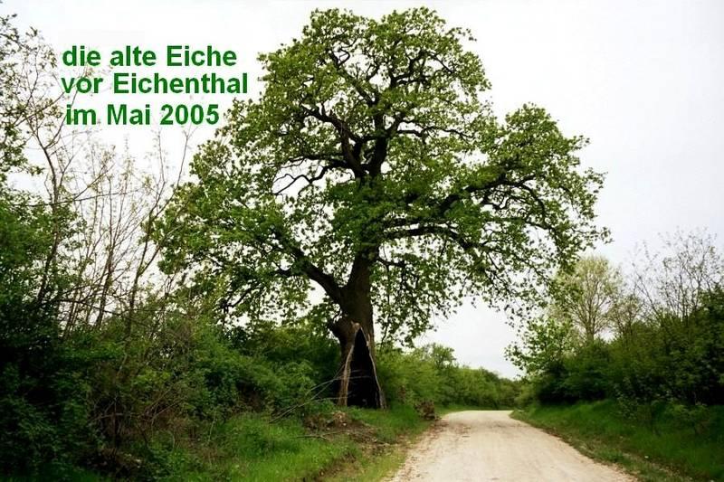 das Wahrzeichen von Eichenthal