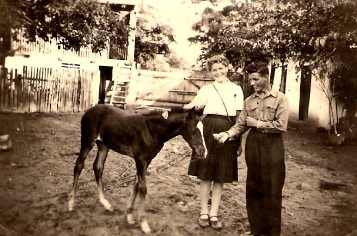 das kleine Fohlen am Bauernhof