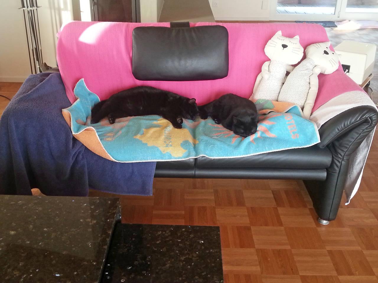 katzenspuren. Black Bedroom Furniture Sets. Home Design Ideas