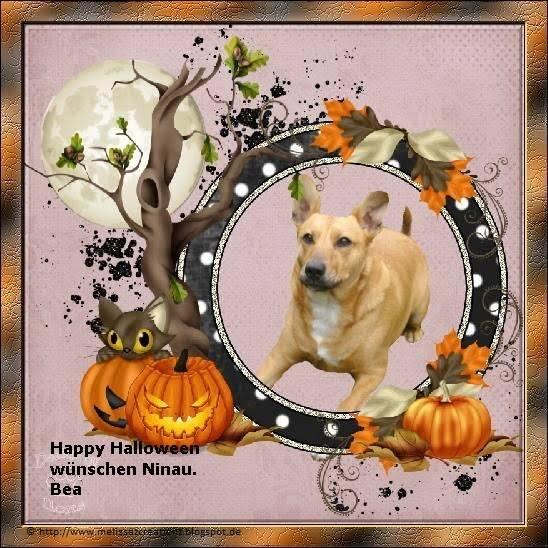 An den Beitrag angehängtes Bild: http://file2.npage.de/011624/75/bilder/halloweenmaus.jpg