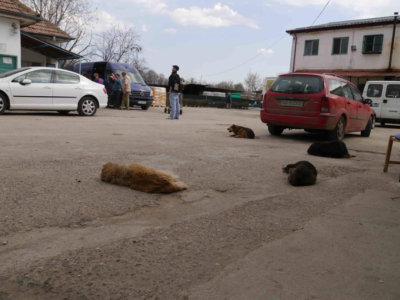 hundefänger auto defekt