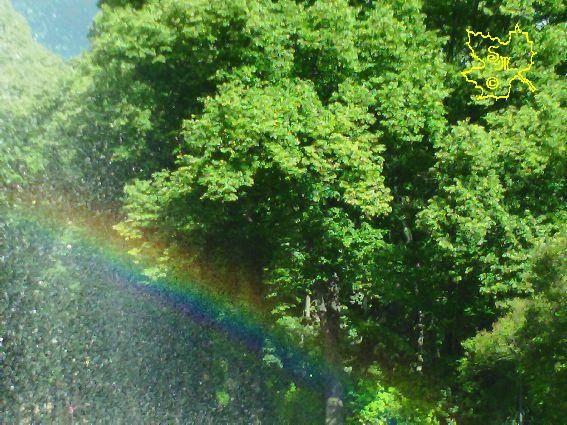 Regenbogen mit Wald