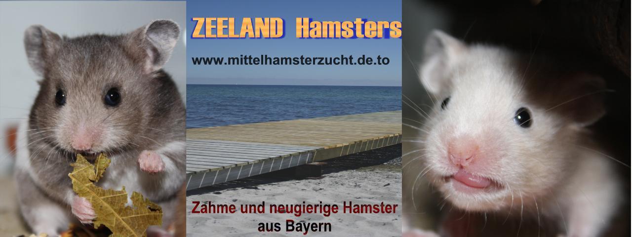 Neuer Banner Hamsterzucht van Zeeland München