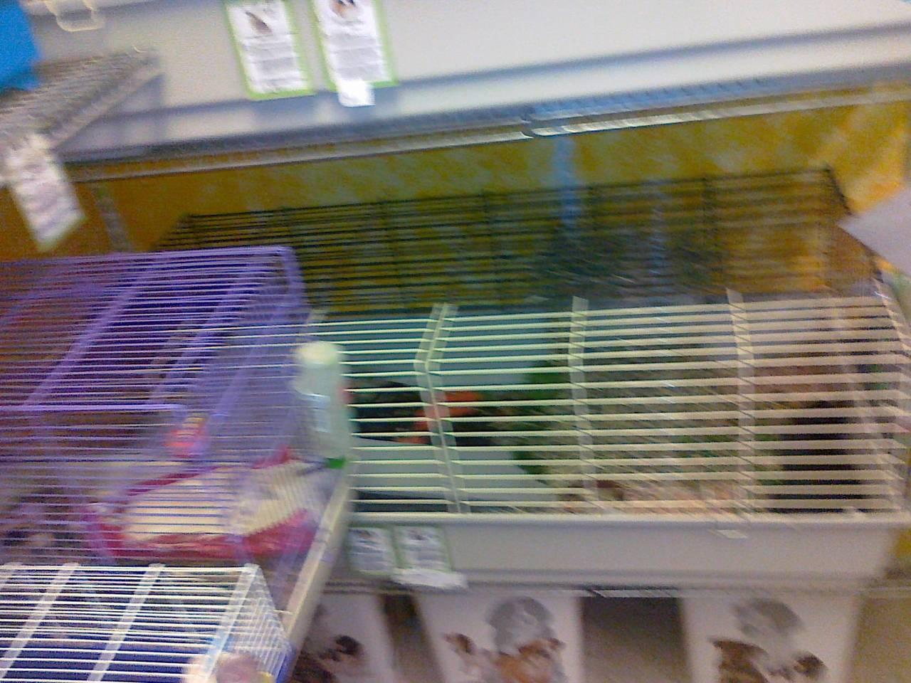 Hamster aus der Zoohandlung  - AUFKLÄRUNG