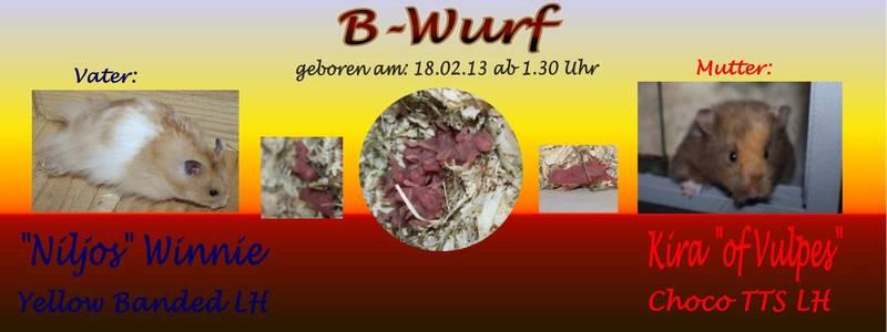 Hamsterzucht München B-Wurf