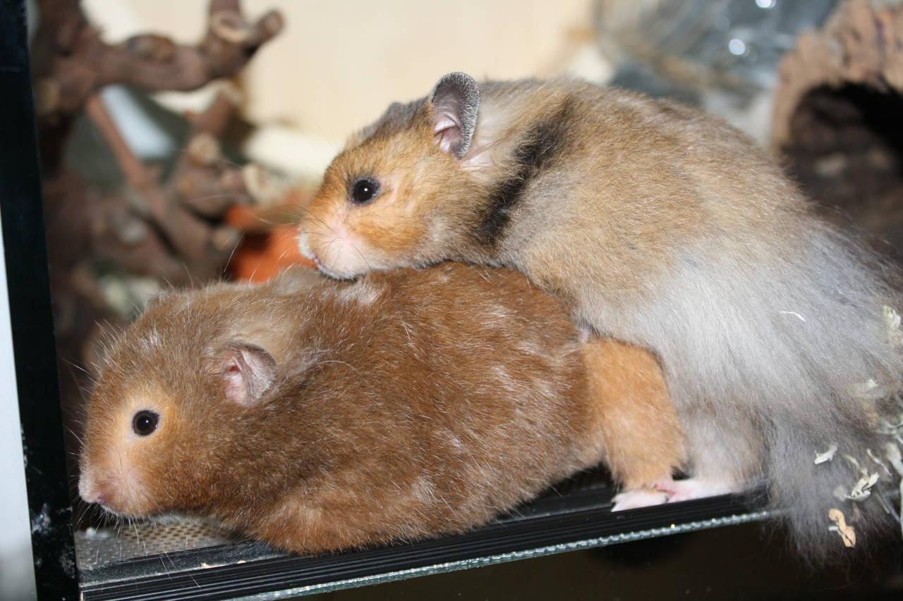 Hamsterzüchter München