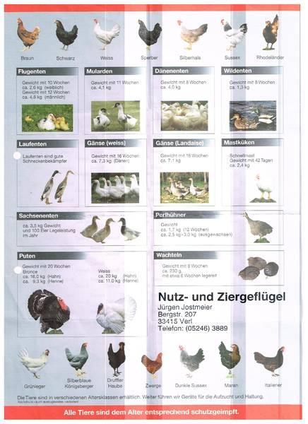 http://www.gefluegel-jostmeier.de/index.html