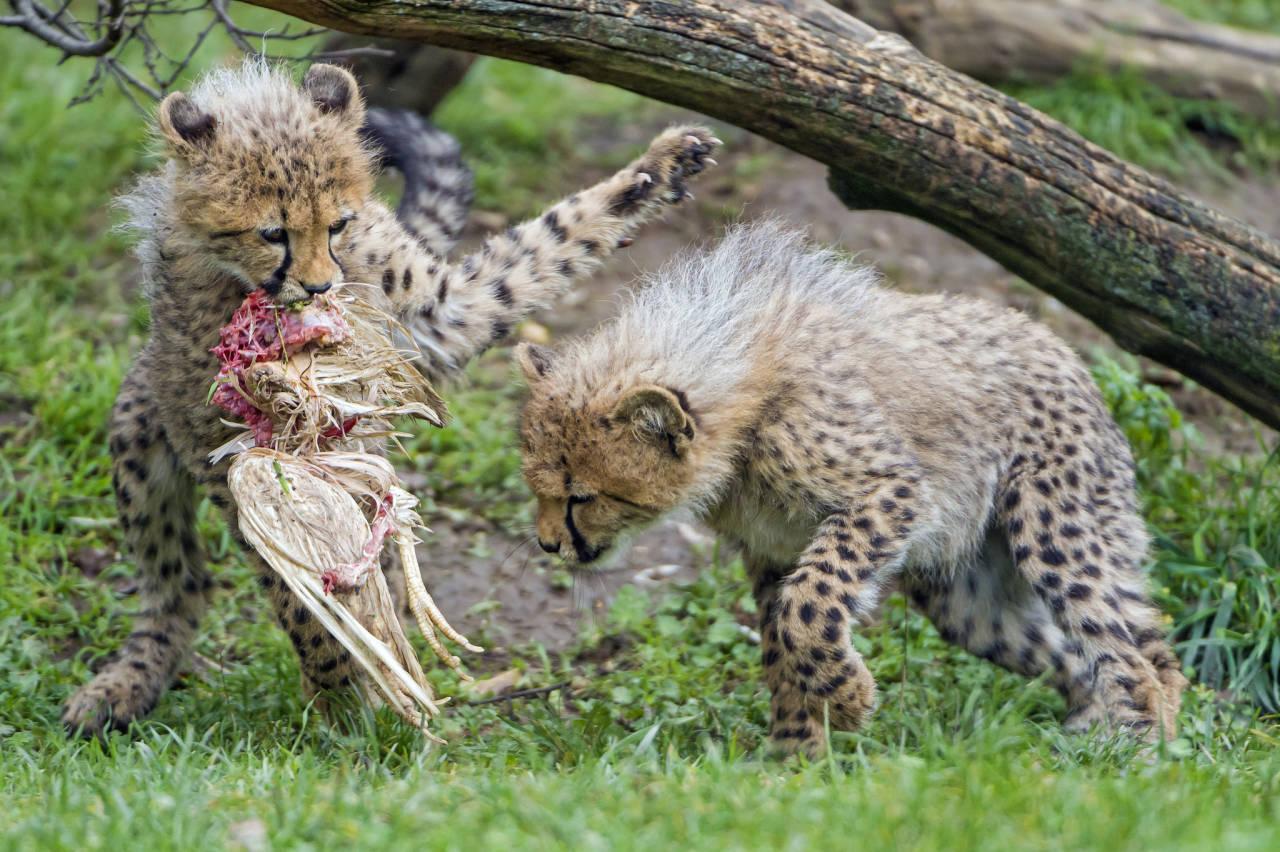 Das Leopardenland.de©