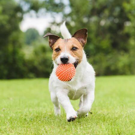 kommando langsam hund