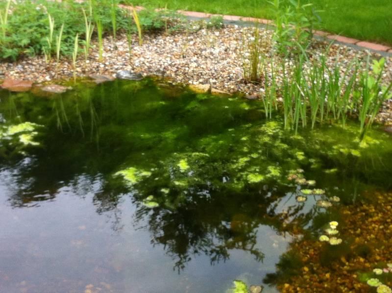 pond repair. Black Bedroom Furniture Sets. Home Design Ideas