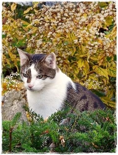 Kater Caio ist mein ständiger Begleiter im Garten.
