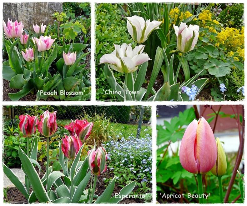 Collage mit verschiedenen Tulpensorten
