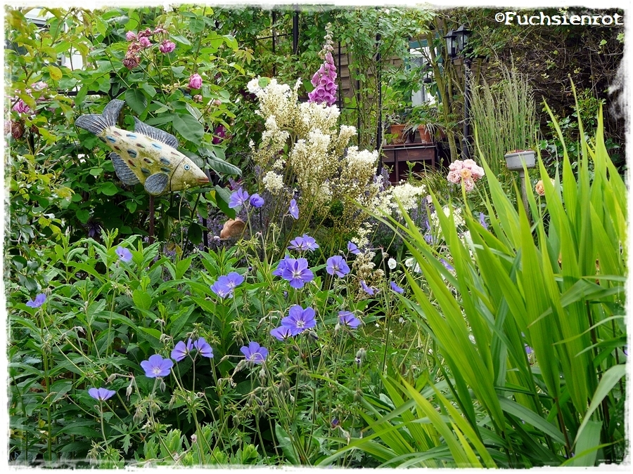 Geranium Brookside im Garten