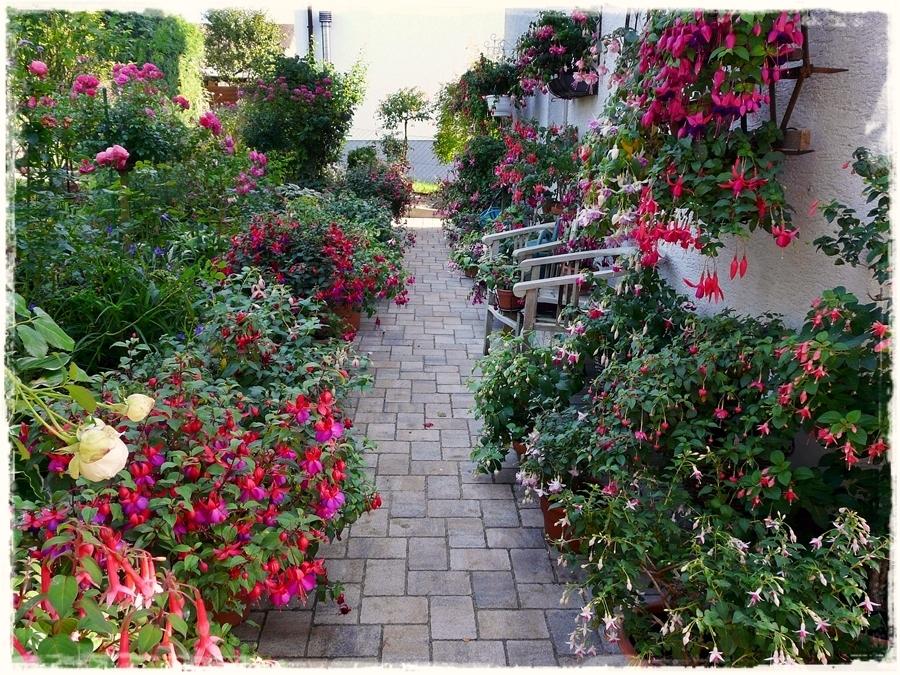 Blühende Fuchsien noch und noch verschönern den Weg.