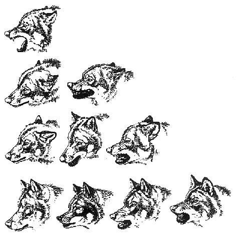 hunde mimik deuten