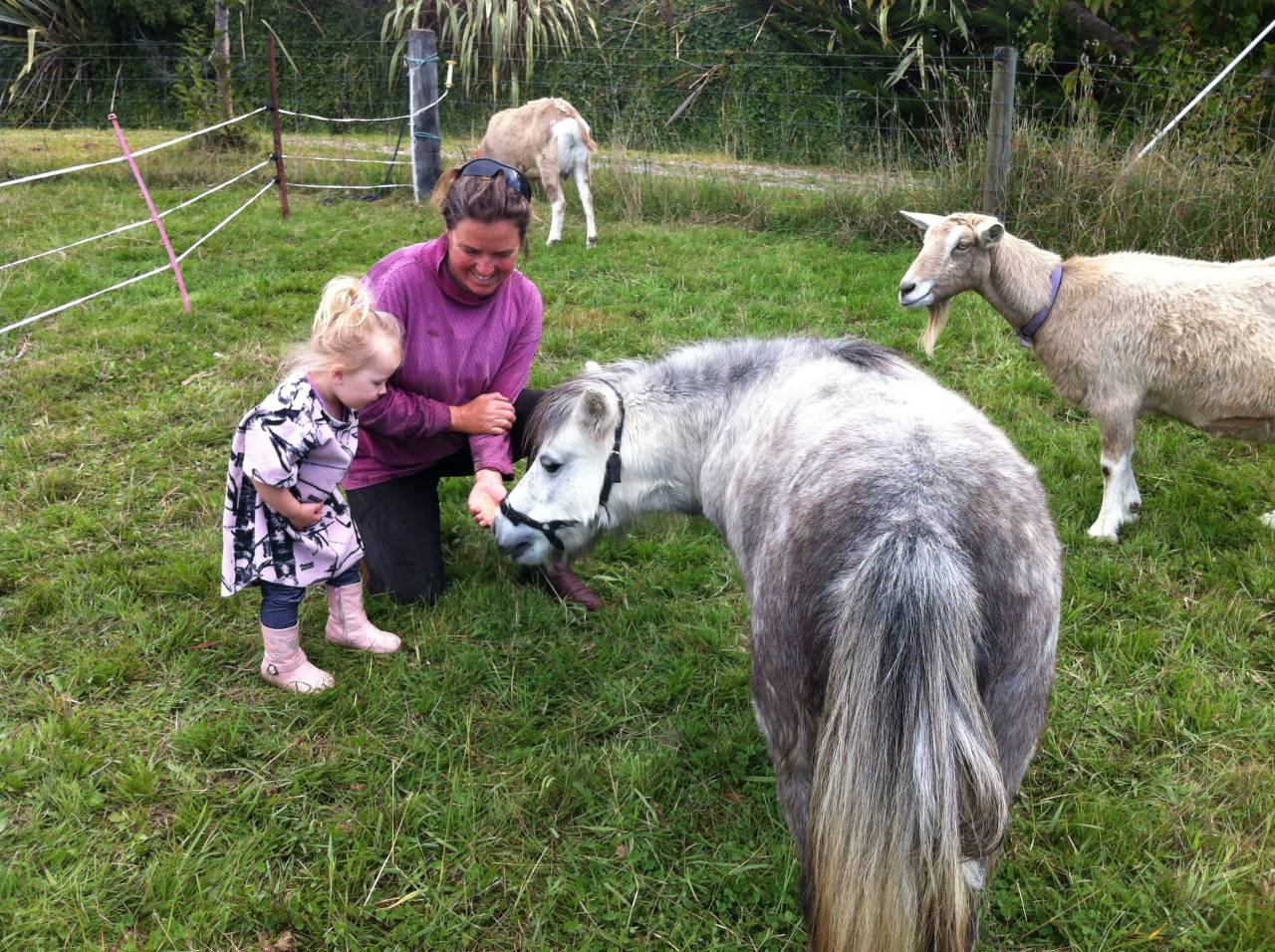 Pony Tiny and the two pet goats