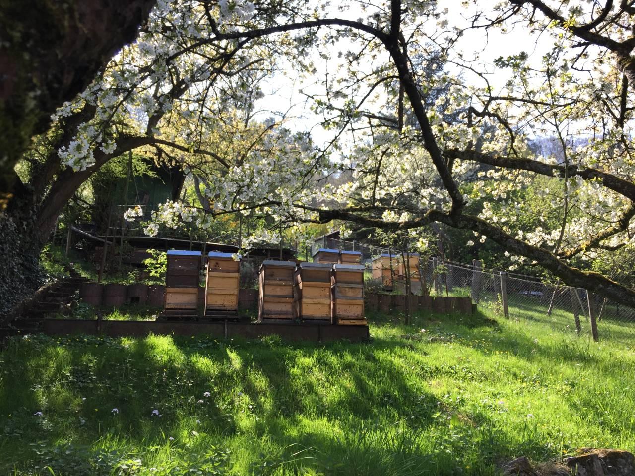 Bienenstand in Stuttgart Wangen