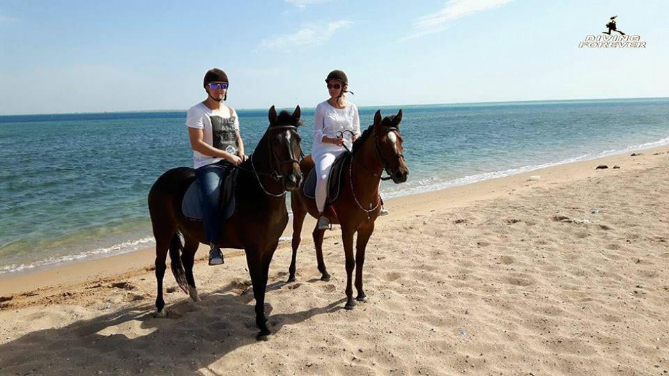Reiten in Hurghada