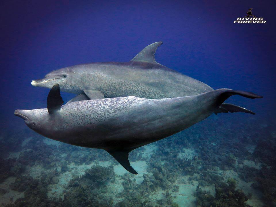 Delfine Hurghada