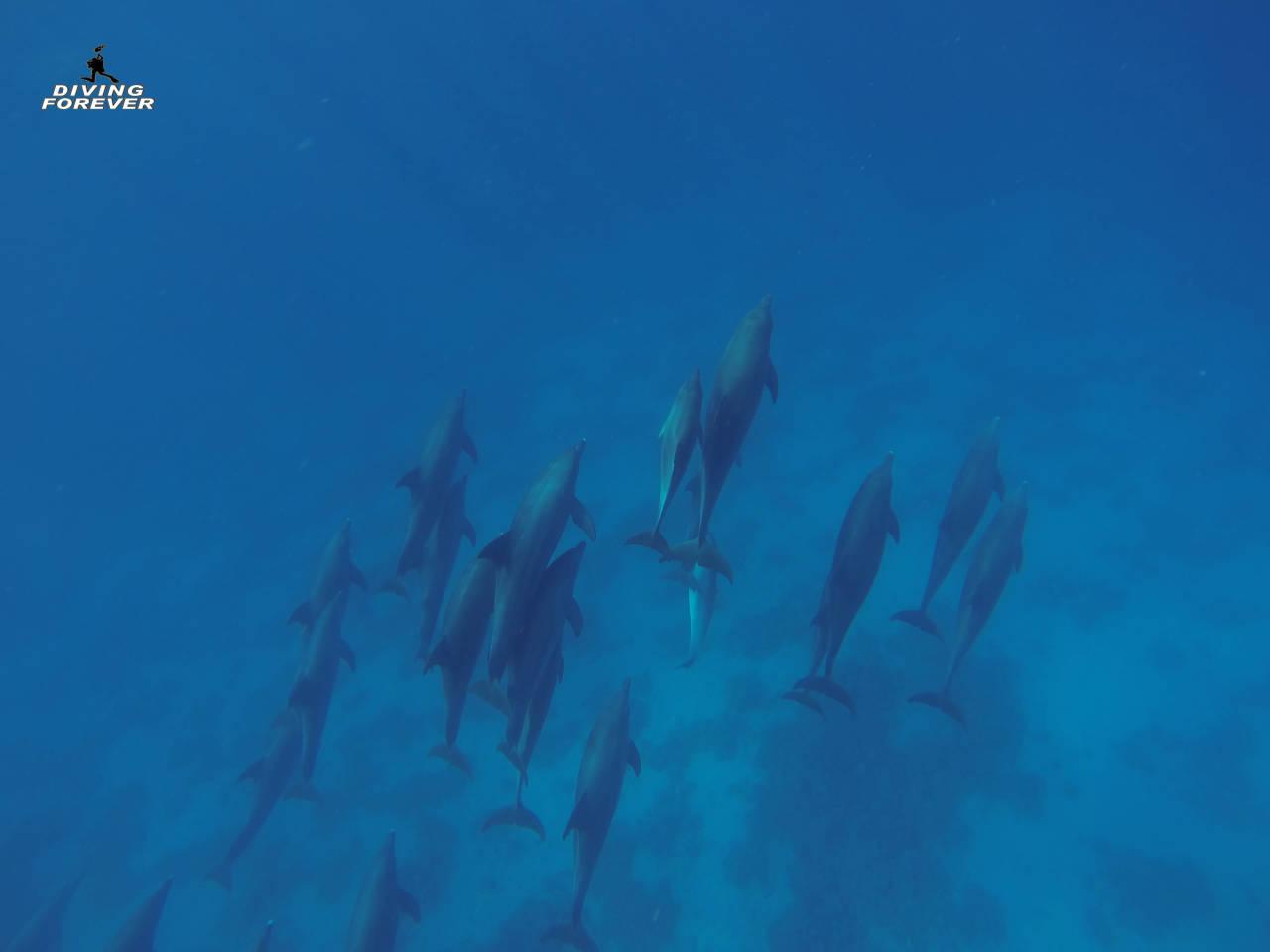 Hurghada Delfine