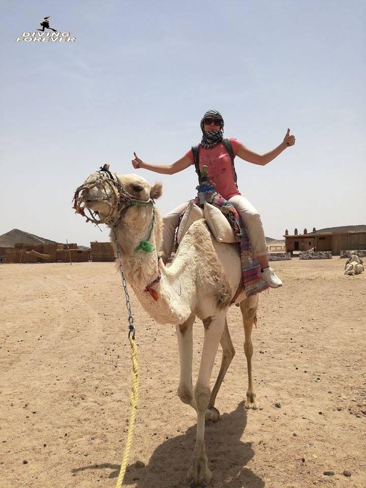 Kamelreiten in Hurghada