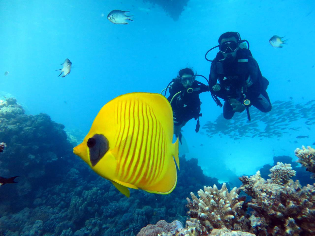 Schnuppertauchen in Hurghada
