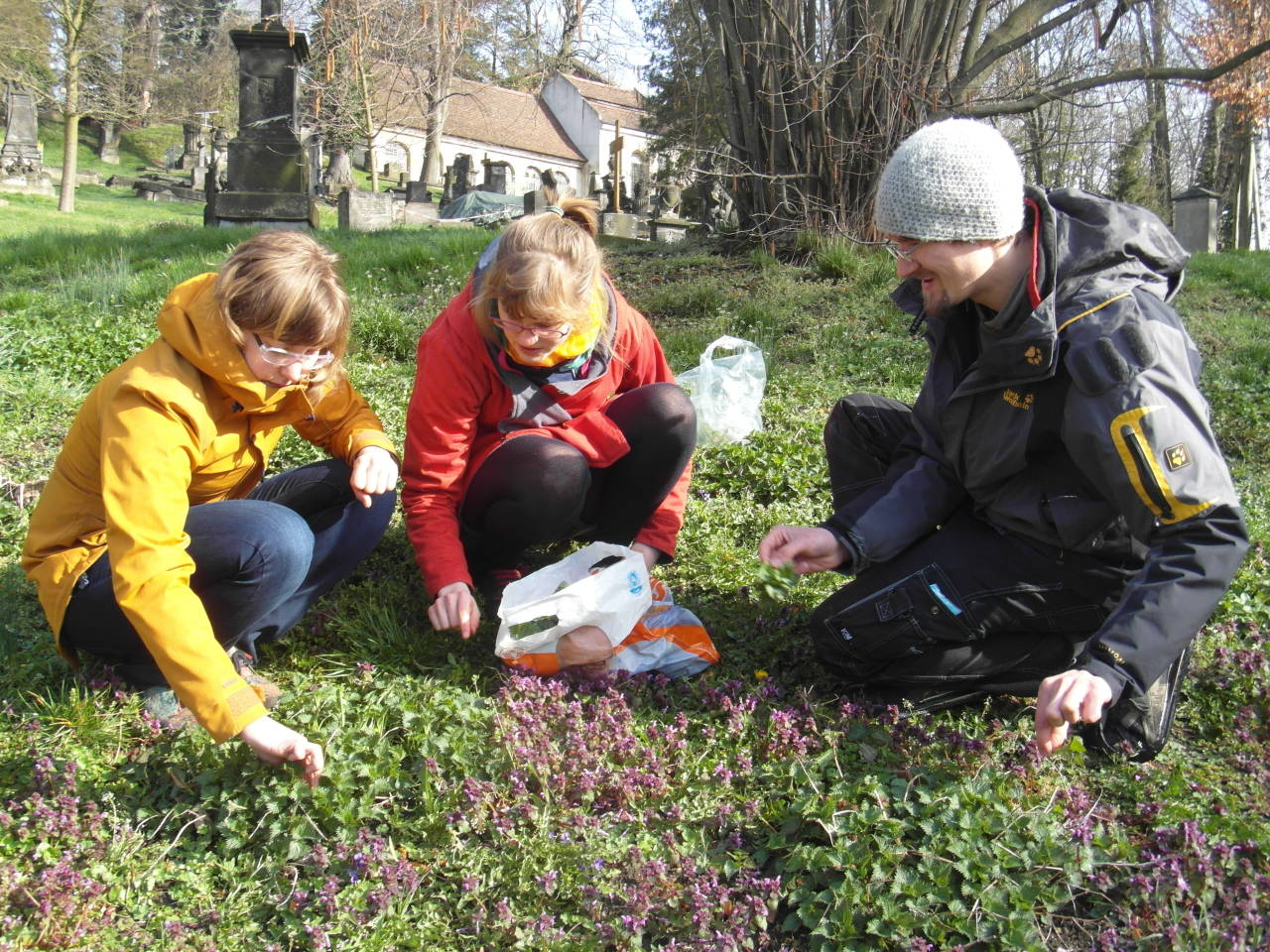 Kräuterführung zum Pflanzensammeln