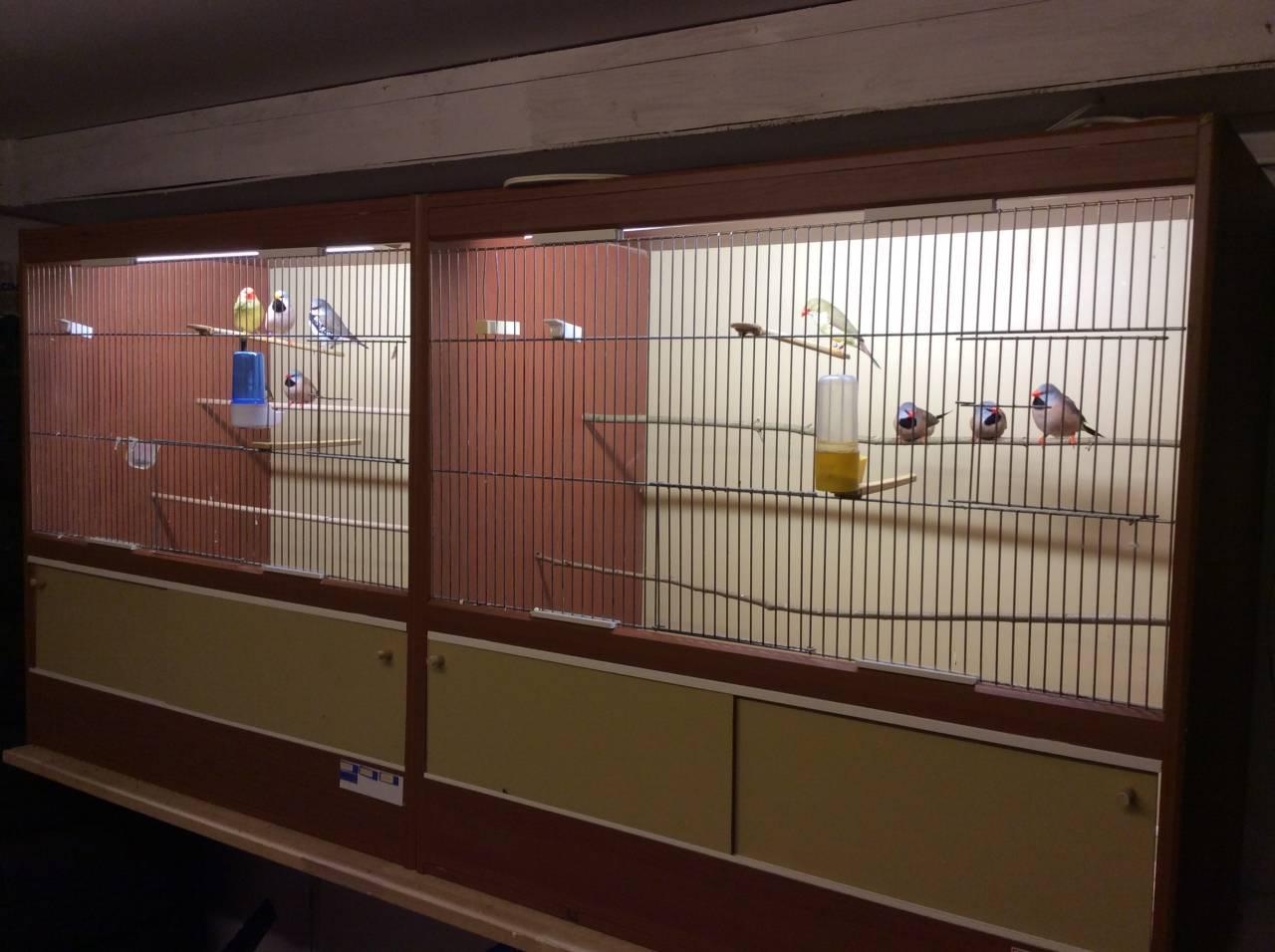 Vogelzucht und Organisator Rollertreffen Fürstenau