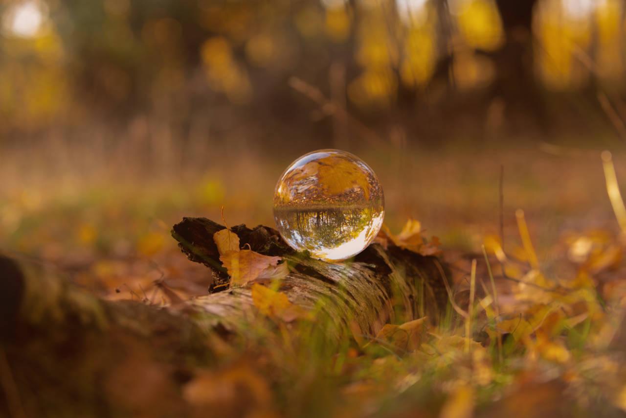 Herbst Impressionen in warmen braun Tönen auf einem Birken Stamm tolle dekoratives Accessoire für Zuhause,