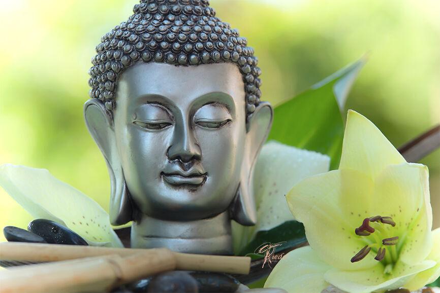 Großer Buddha Kopf mit weißer Lilien Blüte besonders Edel und elegant