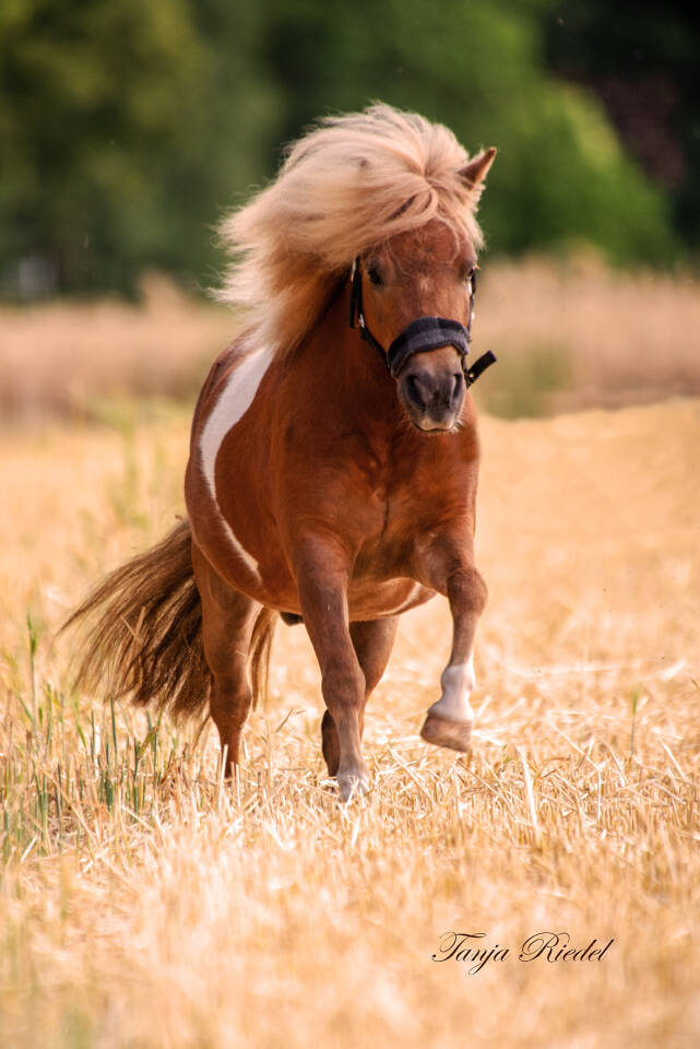 Pferde Fotografie, tierisch schönes Vergnügen, Tierfotografie
