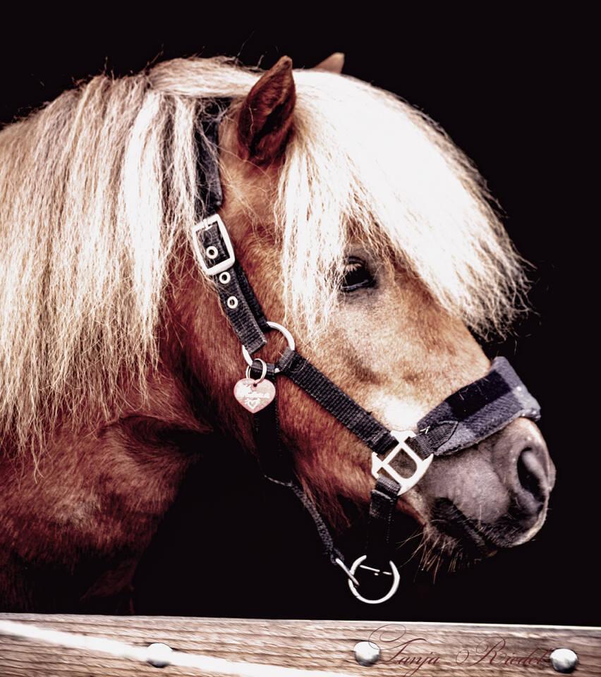 Pferde Portäit, Pferd im Stall Fenster