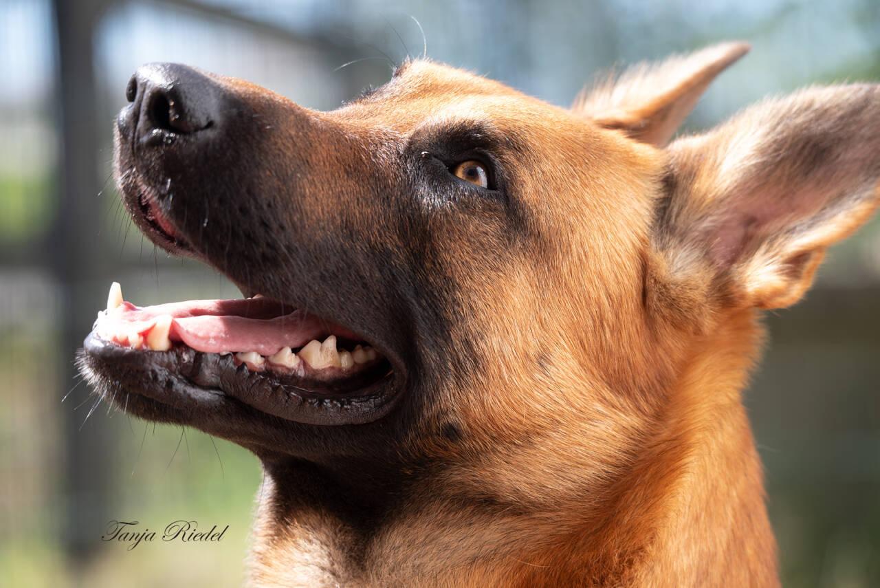 Hunde Fotografie, tierisches Vergnügen für alle Tierbesitzer, einzigartige Bilder von Ihrem Hund