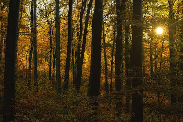 Sonnenuntergang im herbstlichen Wald