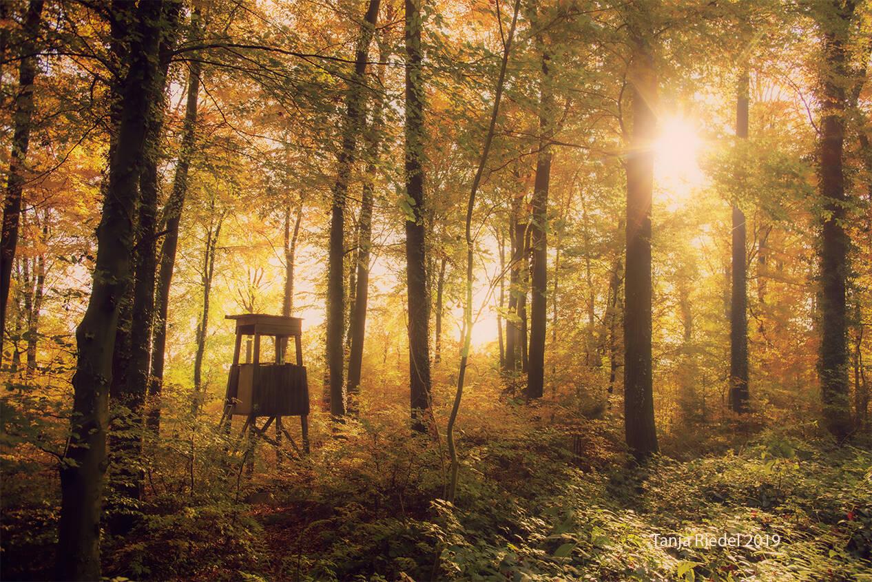 Lichterstimmung im Herbst Wald, zauber aus Sonne, Nebel und buntem Laub, ein Jäger Sitz mitten im Wald bei einem Herbst Spaziergang entdeckt
