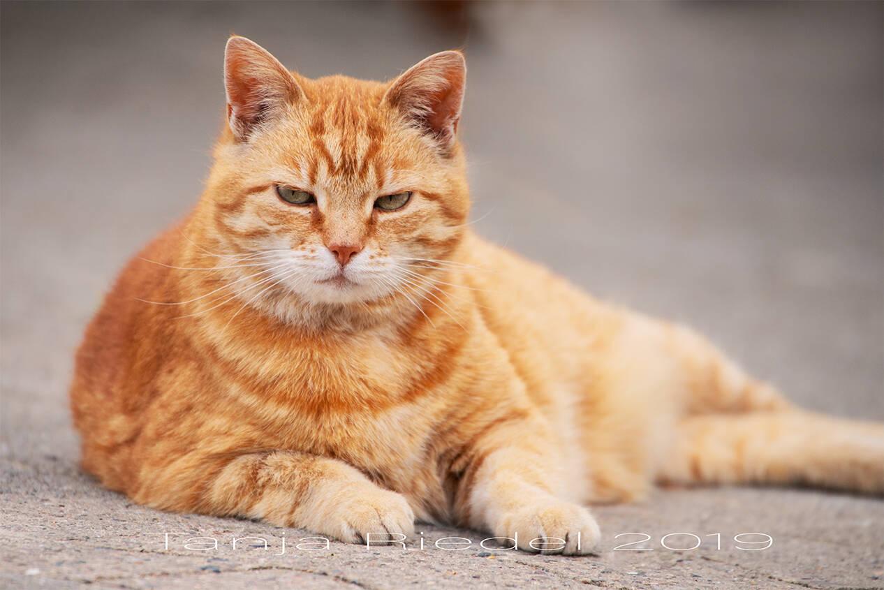 Katzen haben einfach tolle Augen