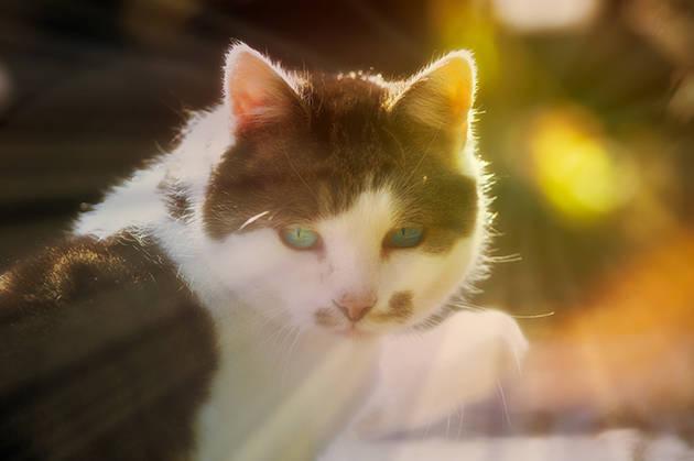 Katze im Sonnenlicht des Herbstes
