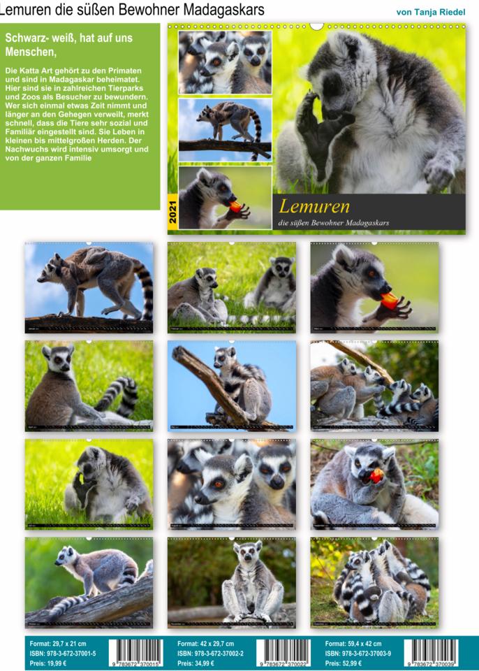 Schwarz-weiß, hat auf uns Menschen eine anziehende Wirkung. Die Katta Art gehört zu den Primaten und sind in Madgaskar beheimatet. Hier in dem Kalender sind die Lemuren zu bewundern. Kalender 2021 Lemuren die süßen Bewohner Madagaskars , Aufnahmen aus dem Zoo und Tierpark