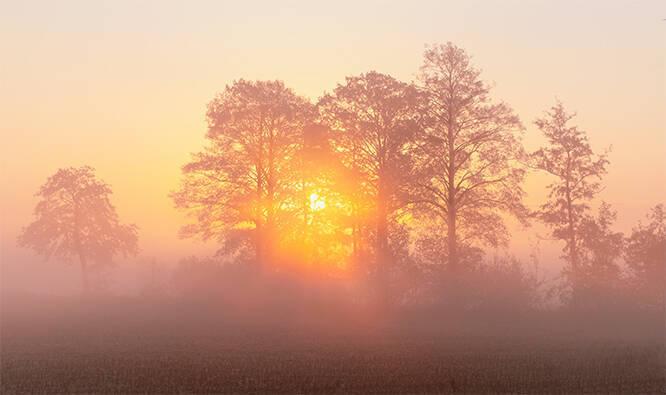 Ein herrlicher Morgen, die Sonne kämpft sich durch den dichten Nebel, eine wunderbare Lichtstimmung entsteht