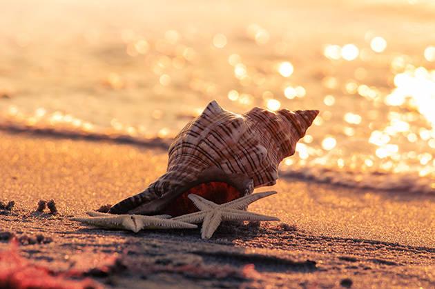 Strand Muschel direkt am Meer