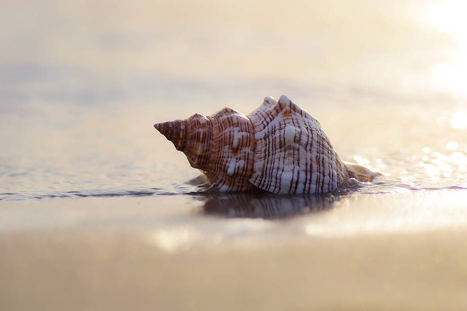 Große Muschel im Meer am Strand Sommer pur holen Sie sich Entspannung, Wohlbefinden und Träume zu sich nach Hause
