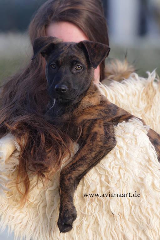 Welpe und Mädchen Hund auf dem Arm