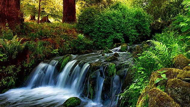 Wasser, Natur, Umwelt, Wasserfall, Kassel, Wilhelmshöhe, Wildnis, Wild, Farn, Bäume, Romantik, Sehnsucht, Leben,