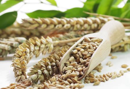 Getreide, Körner, Samen, Weizen, Food, Food Design, Design, Interior, Küche, Küchen, Einrichtung, Genuss, Frisch, Frisches, Produkte, Kaufen, Ernährung,
