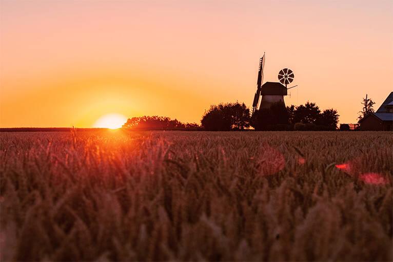 Im Sommer finden in NRW, die Mühlen Tage statt, hier sind im Landkreis die verschiedensten, restaurierten Windmühlen für jedermann geöffnet. Eine tolle Möglichkeit, sein Wissen aktiv zu erweitern, über eine scheinbar vergessene Zeit.