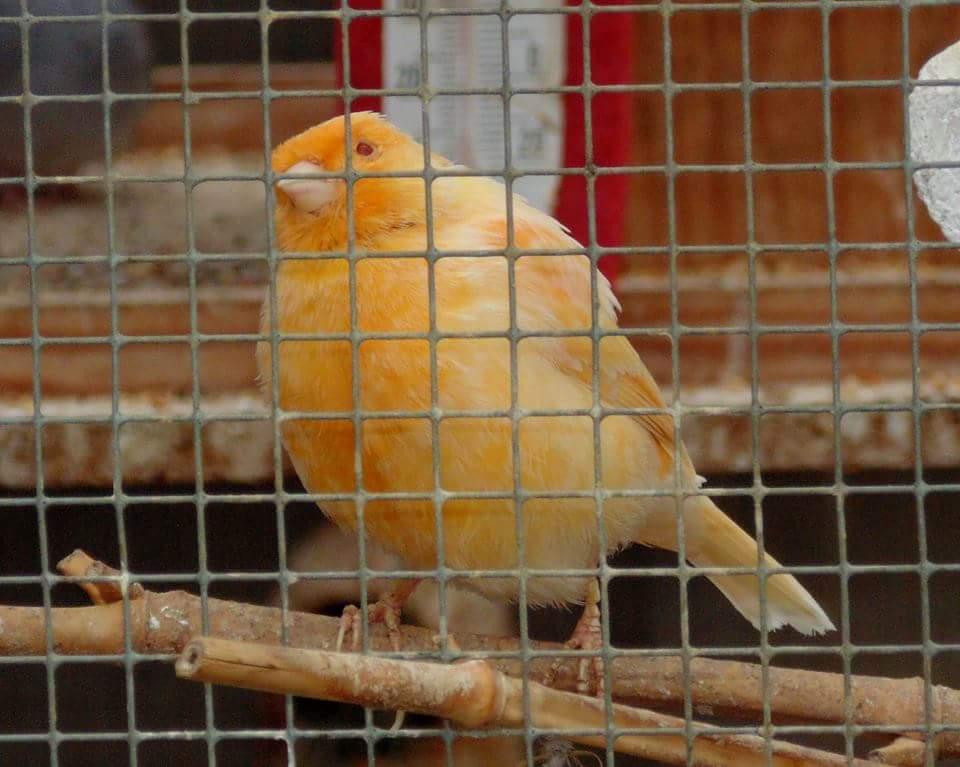 vögel für außenvoliere