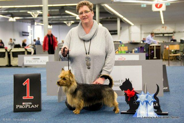 Australian Terrier Lesnoy´s James T. Kirk, Frühjahrssieger 2014, Dortmund, Breeder, Hund, Dog
