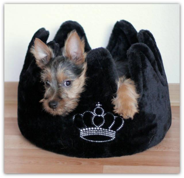 Lesnoy´s James T. Kirk, Australian Terrier, Terrier, Welpe