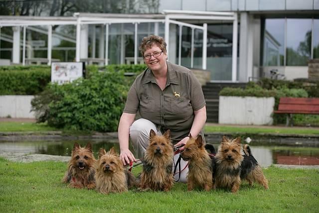 Australian Terrier Lesnoy´s, Terrier, Frau van de Sand